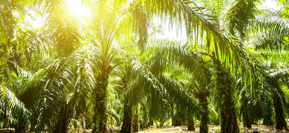 Sustainable Palm