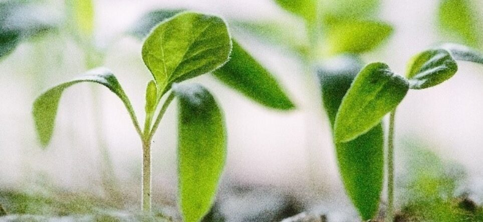 Sustainable Soy Fast Facts